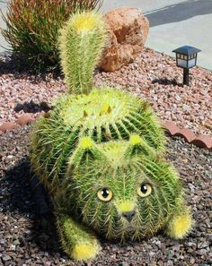 The cactus cat exists! Two of the things that I love the most: cats & cactus Cacti And Succulents, Planting Succulents, Cactus Plants, Garden Plants, House Plants, Planting Flowers, Cactus Seeds, Potted Flowers, Cactus Garden Ideas