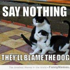 I must say, good tactic cat lol