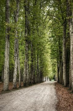 A Path to the Palace of Versailles in France.  We actually walked this path!! It was beautiful!!!