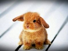 Probably one of the cutest bunnies ive ever seen. <3