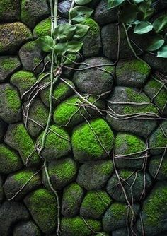 Texture and Pattern: How to Grow Moss - Rocks Foto Nature, All Nature, Garden Art, Garden Design, Cacti Garden, Succulent Planters, Hanging Planters, Nature Architecture, Growing Moss