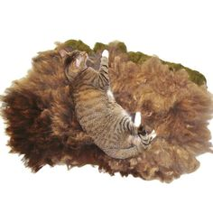 Wool Cat Bed Humane Felted Fleece Rug  Painted by WraptCats