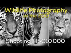Ok, so don't actually throw away your wide angle lens. This video has been made to show that not all landscape images need to be photographed with a wide ang... Nikon D5500, Wide Angle, Wildlife Photography, Short Film, Pet Portraits, Yorkshire, Lens, Landscape, Animals