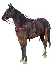 Horses | Draft | Standard | Pony | Amish made harnesses, bridles, and tack