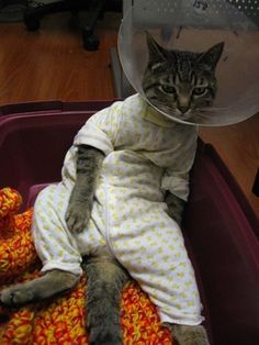 I�m Tired� | 17 Animals All Ready For Bed