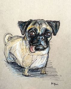 Bruna the Pug Pet Portrait Sketch - Pencil, Pen and Colored Pencil Commissions available - contact Julie for more information: paintmyfaceoff@gmail.com www.juliepfirsch.com