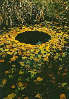 Yellow Leaf Circle  //  By mrsris at flickr. Looks like an impressionistic sunflower