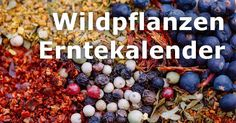 Wildpflanzen Erntekalender: Kräuter, Bäume, Obst & mehr You want to eat a versatile diet? Learn here how to find many healthy and delicious plants in nature. Healing Herbs, Medicinal Herbs, Balcony Plants, Garden Plants, Natural Medicine, Herbal Medicine, All About Plants, Edible Wild Plants, Wild Edibles