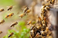 """The US ruling says pesticide use was approved on the basis of """"flawed and limited"""" data, which some campaigners hope will turn the tide against neonicotinoids"""