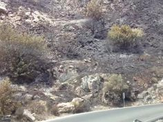 Driving down to Ojen close to Marbella after the recent fire