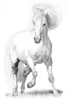 Grey Paso Fino by LindseyTaylor on DeviantArt : Love this sketch by Lindsey Taylor. Looks like she used my little Paso as her model Horse Pencil Drawing, Horse Drawings, Animal Drawings, Pencil Drawings, Animal Sketches, Art Sketches, Horse Sketch, Equine Art, Horse Art