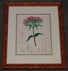 """do red botanicals french 1861 hand coloured engravings 10.5 x 13"""" $175"""