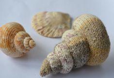 Spiral Shell Knitting Pattern