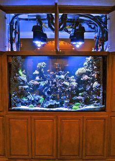 42″ deep, 479-gallon reef system replacing 1600 watts of metal halide.  Corals under Orphek Dif 100 Aquarium led lighting  Photo credit Wet Work   (New Orleans LA 70001 504.458.3019 C  504.644.4601 F)