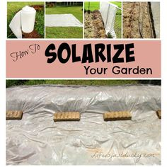 Fungus and Nematodes getting you down? It's time to SOLARIZE your garden. Put the sun to work and make gardening fun again. Learn why and how it's done
