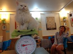 Look at this proud little feline not even bothered about putting on weight at the world's first ever cat cafe!