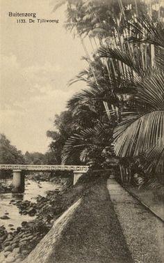 Buitenzorg 1900-1910 : De Tjiliwoeng.