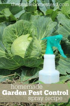 Homemade Garden Pest Control Spray Recipe: