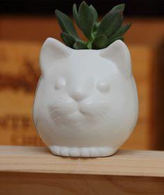 Gato Blanco - Matera. $68.500 COP. Encuentra más materas, floreros y plantas ornamentales en https://www.giferent.com/floreros-plantas-ornamentales