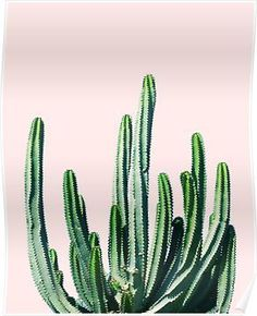 Cactus Botanical Framed Wall Art Print, Multi (More Sizes Available) Buy Cactus, Cactus Print, Cactus Flower, Framed Wall Art, Wall Art Prints, Framed Prints, Canvas Prints, Library Art, Unique Poster