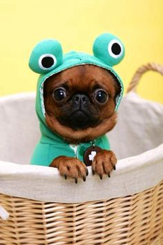 Happy Wednesday everyone! | The Cutest Animals You Have Ever Seen #welovedogs