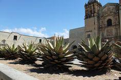 Templo de Santo Domingo en Oaxaca, Mexico. Un poco de la historia y su arquitectura.