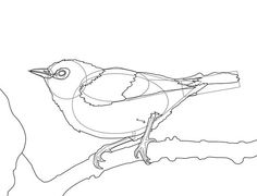 How to Draw a Bird: 16 Steps - wikiHow