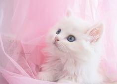 Cute Kitty by Sajida  on 500px