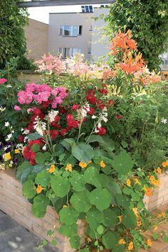 Isoihin altaisiin mahtuu yllättävän paljon kasveja. Väriä antavat muun muassa krassit, orvokit, ryhmäruusut, liljat ja kuunliljat.