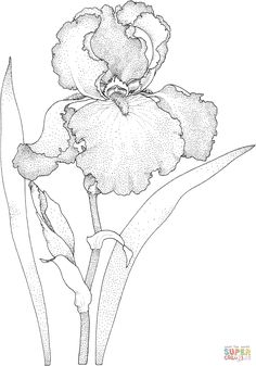 Iris Blossom coloring page from Iris category. Select from 27420 printable crafts of cartoons, nature, animals, Bible and many more. Flower Line Drawings, Flower Sketches, Art Drawings Sketches, Iris Painting, Fabric Painting, Painting & Drawing, Iris Drawing, Floral Drawing, Watercolor Flowers