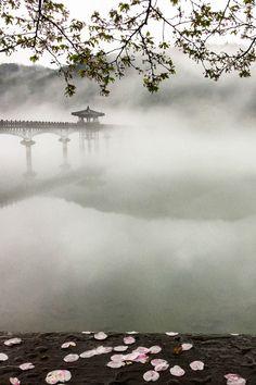 Rain Fog by kbsksh
