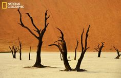 Petrified Camel Thorn Trees (Acacia erioloba) in the salt pan at Dead Vlei (Sossusvlei, Namib Naukluft Park, Namibia). Photography Gallery, Wildlife Photography, Arusha, National Geographic Photos, Visual Effects, Wild Birds, Shots, Africa, Artwork