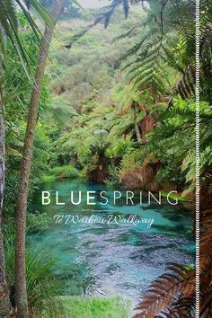 Walk to the Blue Spring: one of NZ's best kept secrets. http://astramotorlodge.co.nz/latest-news/