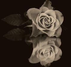 Rose.....gespiegelt...schwarz-weiß