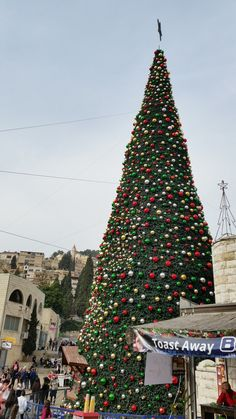 Christmas tree in Israel - Freedom of religion in Israel Freedom Of Religion, Joy To The World, Israel, Around The Worlds, Christmas Tree, Holiday Decor, Teal Christmas Tree, Xmas Trees, Christmas Trees