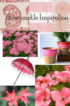 hunesuckle garden inspiration for the garden - pantine color forecast 2011 www.pithandvigor.com  Across the Top, a selection of outdoor fabrics from Link Design Solutions. Achillea 'Summerwine' available from Perryhill Nurseries.  Rainbow flower pots in pink from Twine. Garden Parasol from Planet Pink.  Bottom, Anomatheca laxa (False freesia) a bulb for naturalizing in zones 8-11. Available from Terrapin Gardens. Cornus kousa 'Satomi' (Chinese Dogwood).