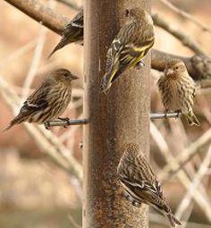 Get Started Feeding Birds: It is easy to get started feeding birds.