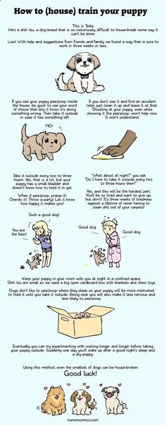 Best Dog Training - CLICK THE IMAGE for Various Dog Care and Training Ideas. #dogtraining #dogtrainingideas