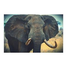 African Elephant Wrapped Canvas