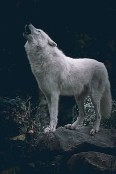 Wolf Gurus is the number 1 eCommerce site about wolf. until today we sell about Item About wolf, native america, viking, dream catcher. Nature Animals, Animals And Pets, Cute Animals, Wildlife Nature, Wolf Photography, Wildlife Photography, Photography Ideas, Wolf Spirit, Spirit Animal