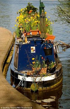 The sun shining on a pretty canal boat on the River Thames in London. Barge Boat, Canal Barge, Floating Garden, Floating House, Canal Boat Interior, Trains, Dutch Barge, Houseboat Living, Living On A Boat