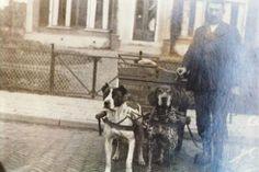 Meindert Hamstra te Stiens met de hondenkar van de Centrale Bakkerij. De honden heetten Bobby en Hugo. Foto eerste helft 20e eeuw.