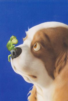 Dog with Frog | Flickr - Photo Sharing!