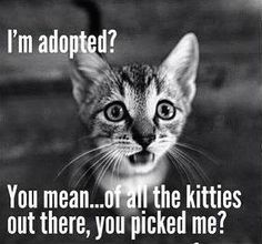 """""""I'm adopted?of all the kitties out there, you picked me?"""" from Animal Rescue Site More True love found! I'm adopted?of all the kitties out there, you picked me? from Animal Rescue Site Cute Funny Animals, Funny Animal Pictures, Cute Baby Animals, Funny Cats, Wild Animals, Cat Quotes, Animal Quotes, Animal Rescue Quotes, I Love Cats"""