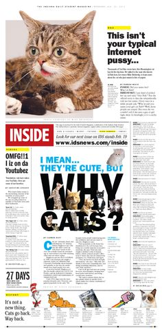 Inside Magazine section front on Lil Bub. Includes a Q+A with Lil Bub's owner, Mike Bridavsky. Crazy Cat Lady, Crazy Cats, Inside Magazine, Make Me Smile, Cute, January, Editorial, Graphics, Mini