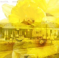 #doubleexposure #fineart #photography #belcrum #breda, the Netherlands - Artwork € 450,- per digital design, 1:1 € 999,- per digital file, for prints ask info@artstudio23.com for a quote #dutch #design #brabant #station #bredacentraal #viabreda #narcis #geel #daffodil #yellow