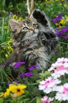 How cute are these babies, snuggling kittens and ferret kits Cute Cats And Kittens, I Love Cats, Crazy Cats, Cool Cats, Kittens Cutest, Pretty Cats, Beautiful Cats, Chat Maine Coon, Baby Animals