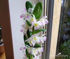 Uprawa storczyka dendrobium nobile oraz pobudzanie go do kwitnienia Dendrobium Nobile, My Secret Garden, Garden Gates, Gardening Tips, House Plants, Diy And Crafts, Flora, Landscape, Creative