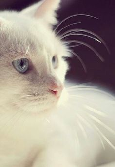 Great whiskers.