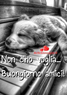 immagini-frasi-buongiorno-per-whatsapp